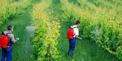 سولفات مس کشاورزی